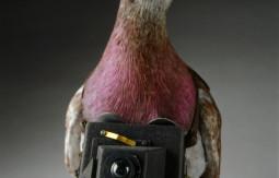 Pigeon_spy_f-660x797.jpg