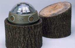 treestump-660x538.jpg